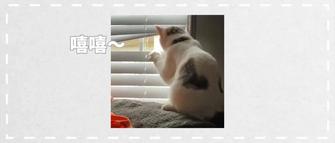 原18图证明猫咪看热闹的能力堪比村里大妈!
