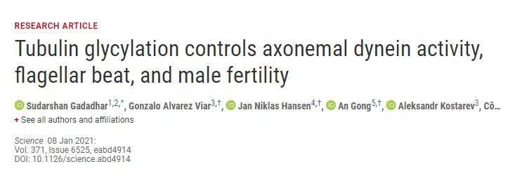 陈根:精子游动却不能受精?