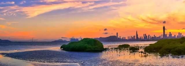 深圳湾观鸟最佳时间表来啦