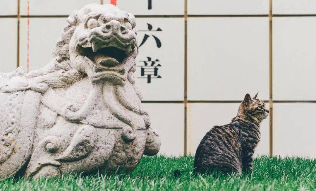 【马霸霸】除了故宫,还有一个...,宠物趣闻丨猫咪博物馆