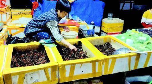 小龙虾猛降价吃货们不买账 每斤便宜5元销量远不及去