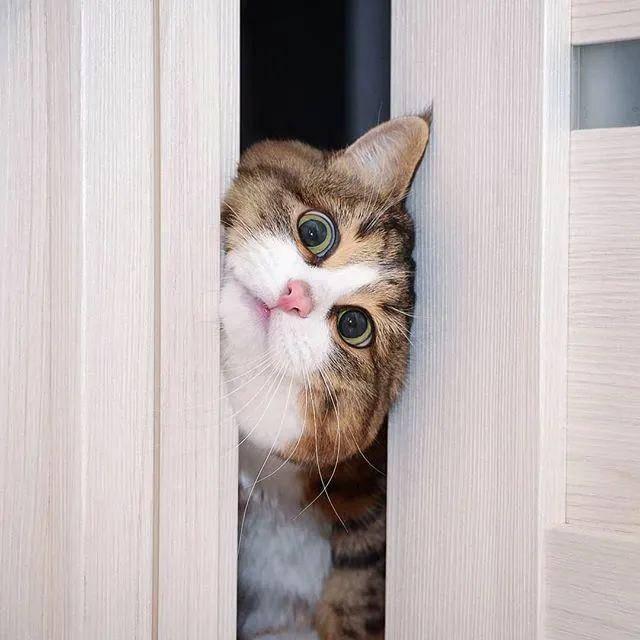 #Rexie#,哈哈哈!不行了,这是我吸过最逗的猫!