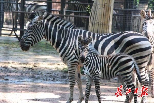 儿童节,来动物园看刚出生的动物宝宝