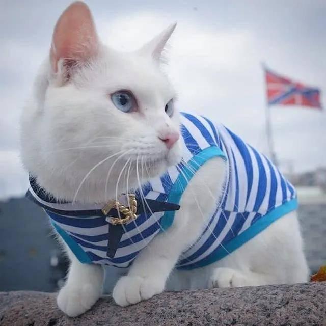 萌化!舰猫雪白太可爱,穿海魂衫站岗,有人愿捐猫给055大驱吗?
