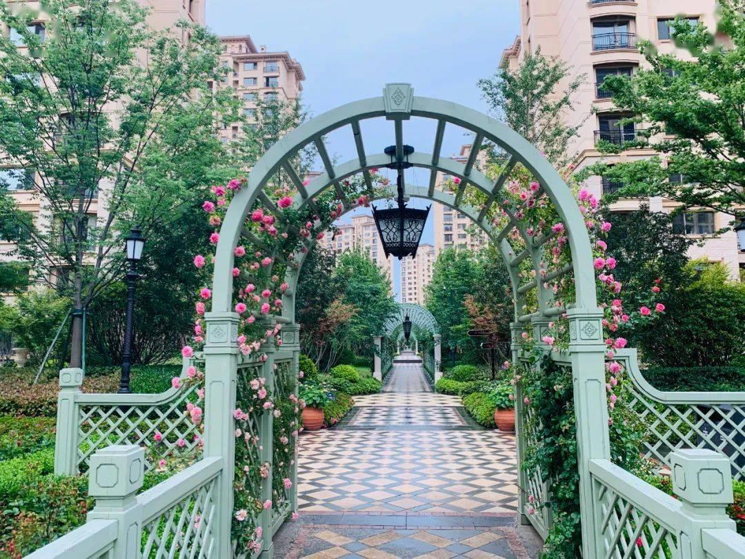 随珠玫瑰园,爱丽丝仙境!320米长廊,十几种欧洲玫瑰盛开,每位业主都忍不住拍照