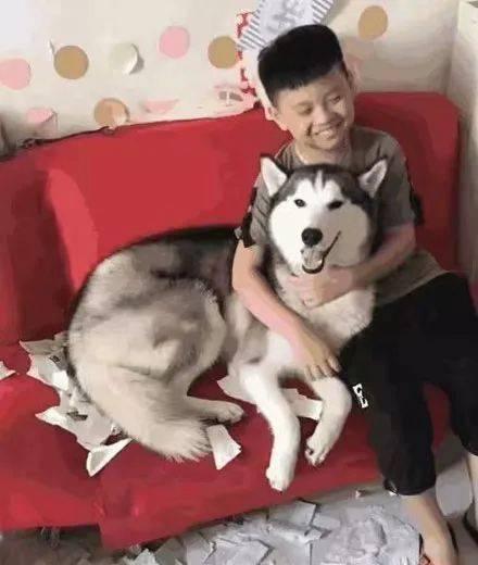 网友让二哈陪着儿子做暑假作业,效果回来后看到惊讶的一幕,小孩:先生我的作业本被狗吃了,你信吗?