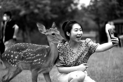 明孝陵来了8只可爱的梅花鹿