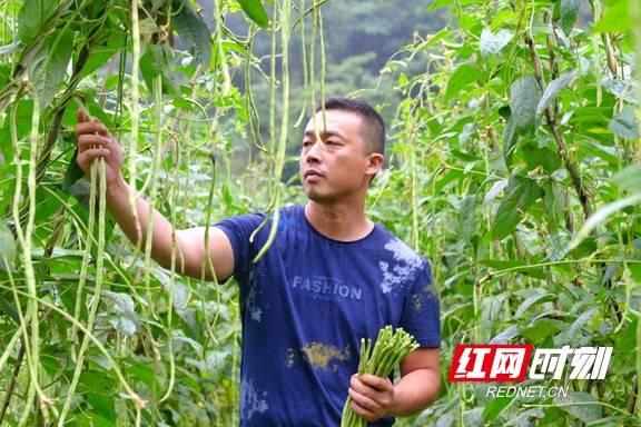 永顺:朗溪深山蔬菜俏销花城
