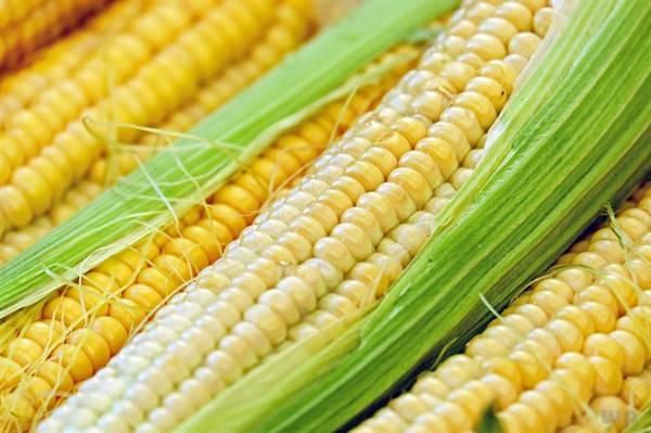 【效果】为什么玉米很少有人会不喜欢?看完它的功效想不喜欢都难啊!