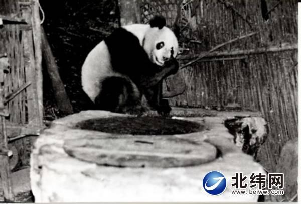 """""""乐乐""""上灶台-北纬网(雅安新闻网)"""