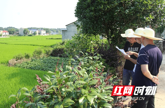 """宁乡:""""金土地""""结硕果 """"俏乡村""""焕新颜"""