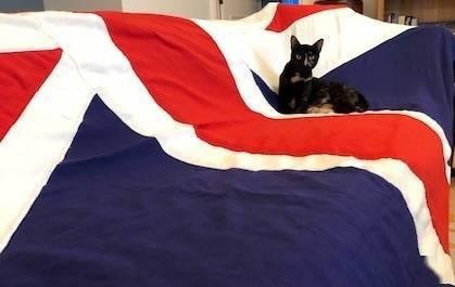 更爱乡下生活!英国外交部首席捕鼠猫将退休 在推特上有10万粉丝_中欧新闻_欧洲中文网