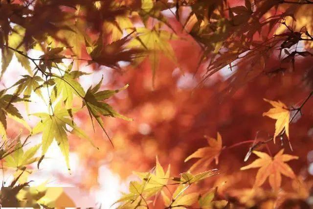 立秋,健康健身的黄金季节,请正确粘贴