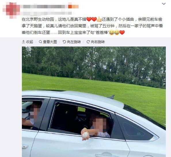 游客偷拿天鹅蛋,北京野生动物园回应:深感遗憾