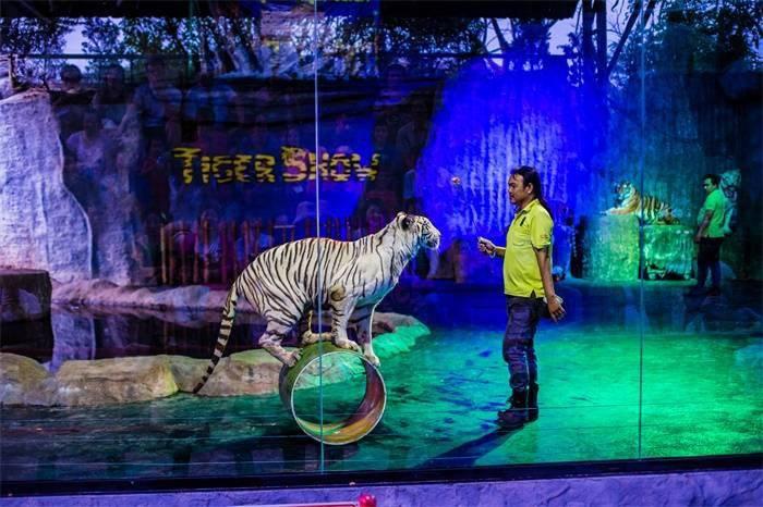 降低疫情亏损!德国马戏团卖狮子粪便每瓶5欧元,旗下26头猛兽保证货源充足_德国新闻_德国中文网