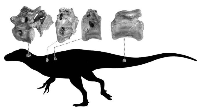 """霸王龙""""表亲""""的化石在英国海滩被发现 距今约1.15亿年"""