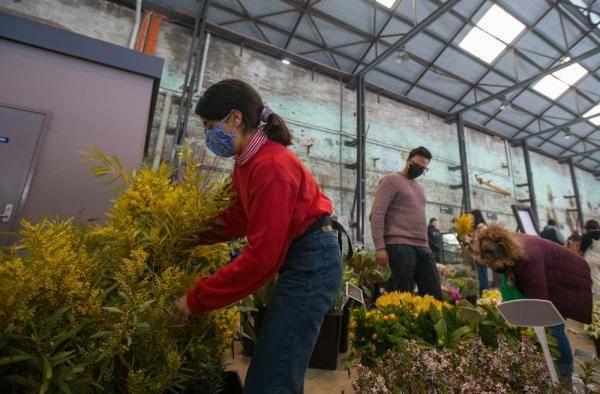 悉尼:疫情中的市集