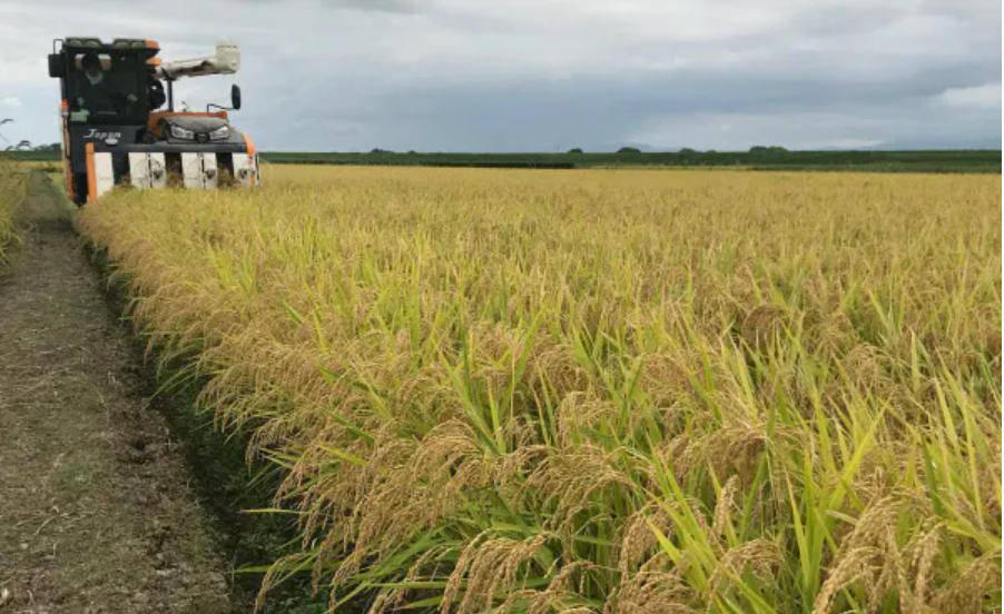 米价太高?节约意识增强?食肉增多?日本国内大米需求年减22万吨