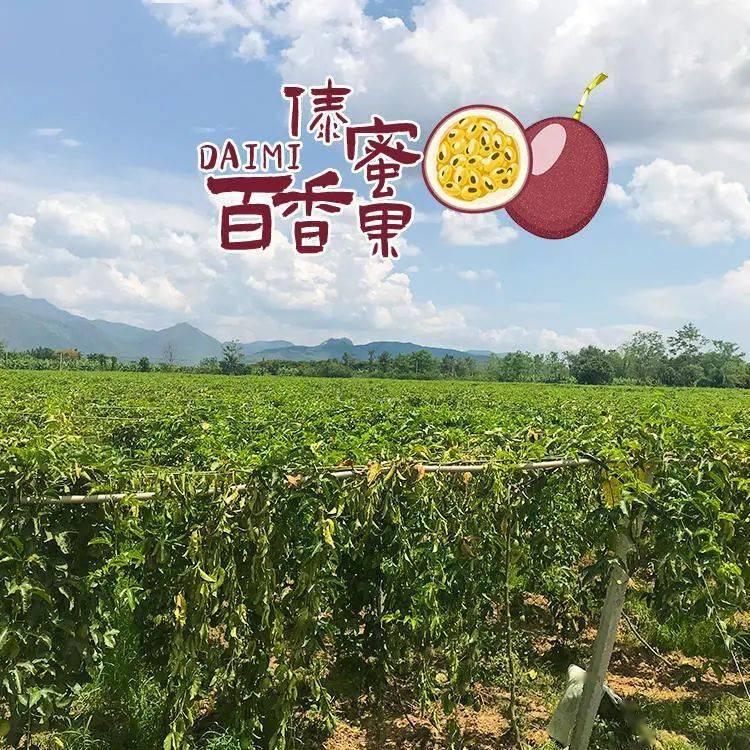 【现摘傣蜜百香果】大型果园直发,冰点价格!青金桔、百香果和青柠檬的完美邂逅上线!