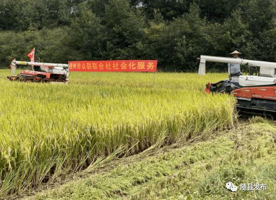 随县组织农机抢收保障颗粒回库
