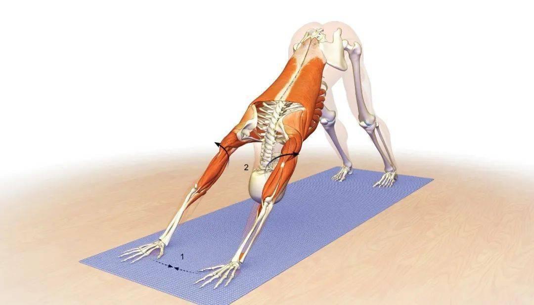 腰痛不要只做拉伸,加强核心很重要!(附6个调理练习)