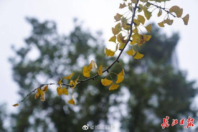 武汉:汉口江滩等景点今日白天均有雨,出游请做好防雨措施