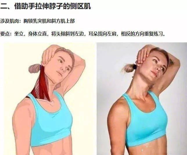 拉伸动作3D图解,拯救你的腰酸背痛!