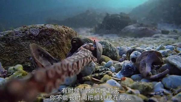 我的章鱼老师-5