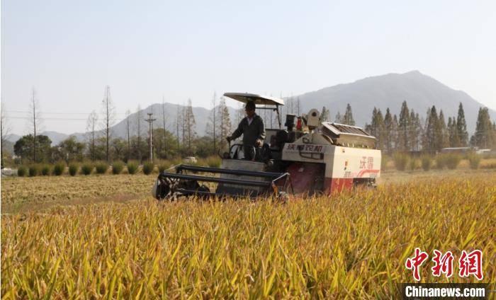 """平均亩产827.4公斤 """"湘两优900""""在浙江临海试种成功"""