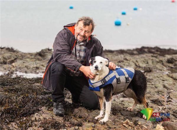 牧羊犬欲尝试畅游超长水域 堪比横渡英吉利海峡