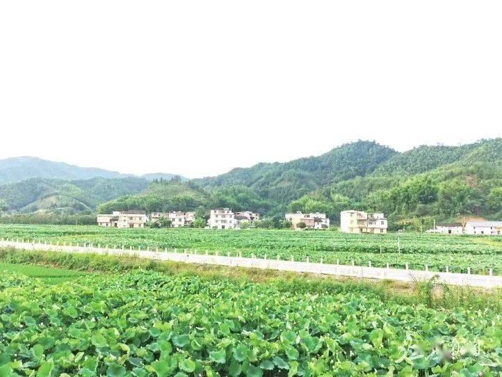 崇义杰坝人口_崇义杰坝乡风景