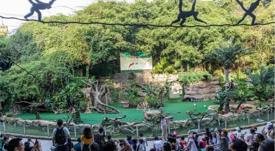 低至8折!11月29日陈立农、李现携《赤狐书生》一起来长隆探秘神奇动物!