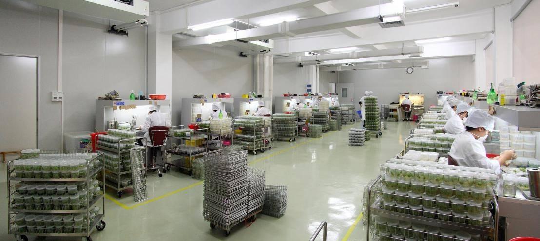 """""""广花""""红掌新品技术再创新,新增社会经济效益近25亿"""