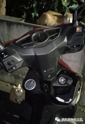 车窗忘了关,没想到转眼间便发现2只猫乘客自动上车!