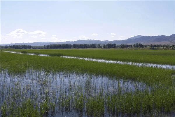 山西国家湿地公园,新增3处  第3张