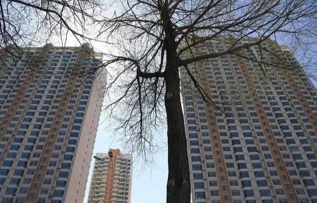 """楼市遭遇""""黑天鹅"""",这三类人深陷其中,最惨的竟然不是炒房客"""