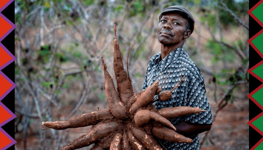 我们联络了非洲的农场主,知道了发财的奥秘