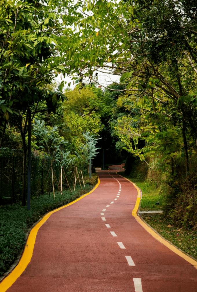 深圳最美绿道来了!15公里超长花带、艺术小镇、采摘园……