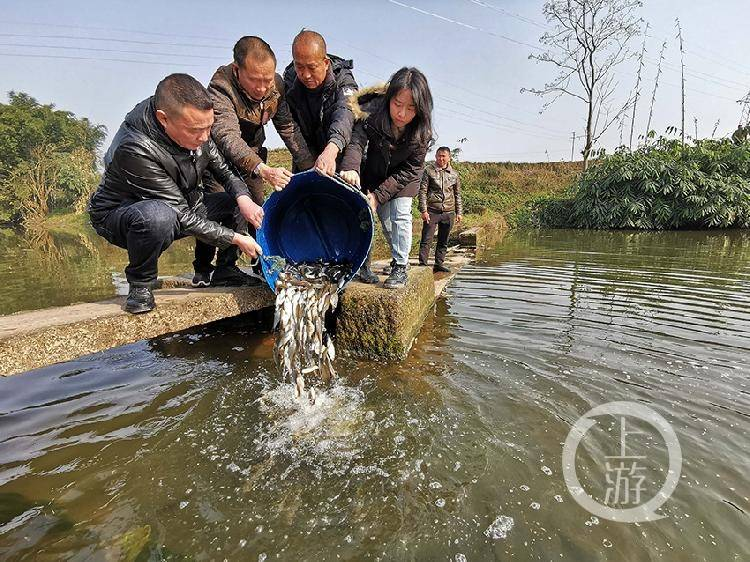 增殖放流护生态 20万尾鱼苗入永川河