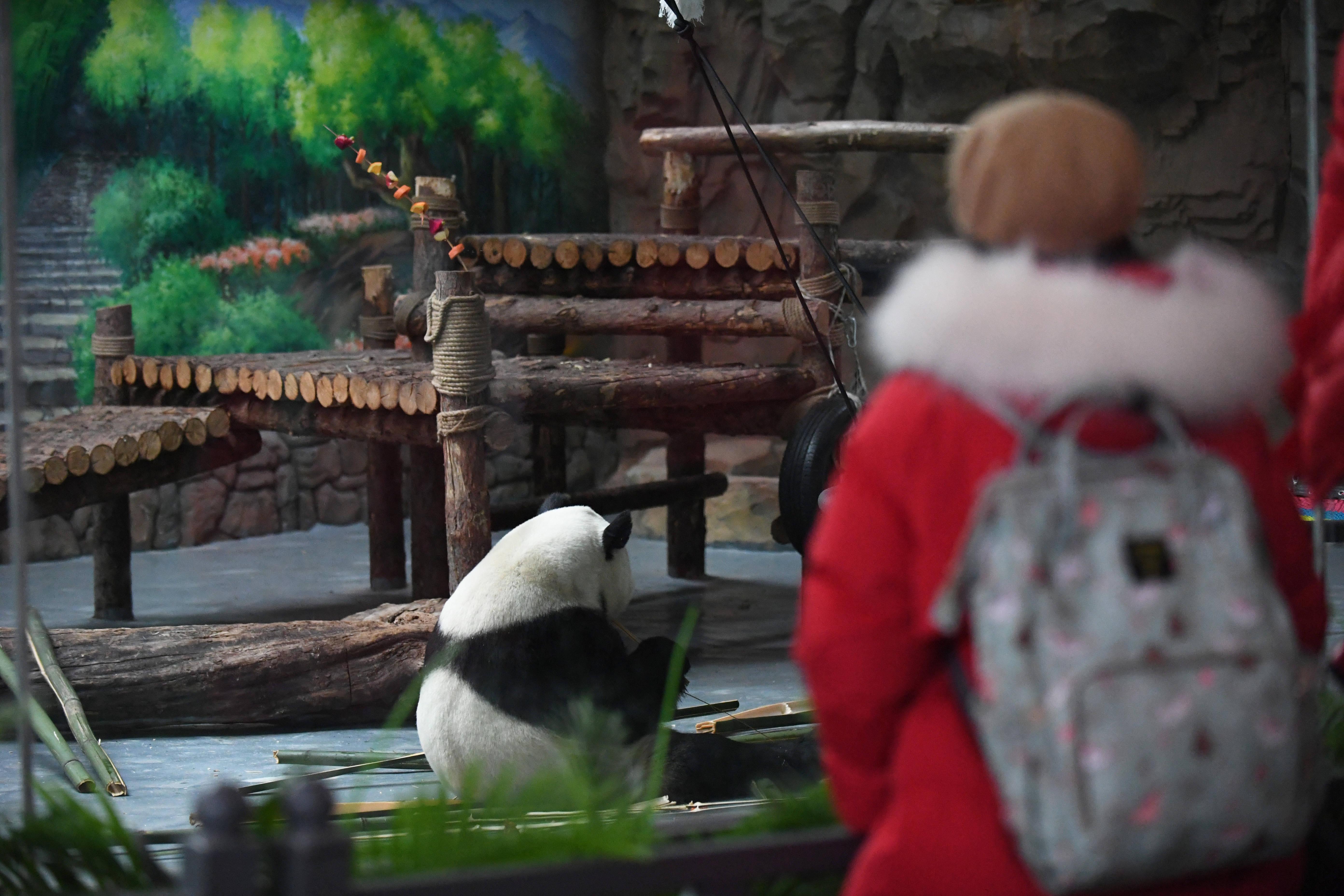 西宁市:看小熊猫过新年