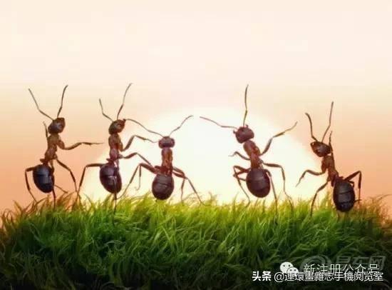 蟋蟀是益虫还是害虫(蟋蟀进屋是什么征兆)