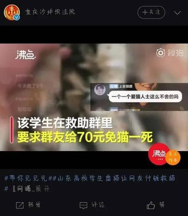 """张洪泉:大学生虐猫被""""引咎退学""""是一种教育暴力"""