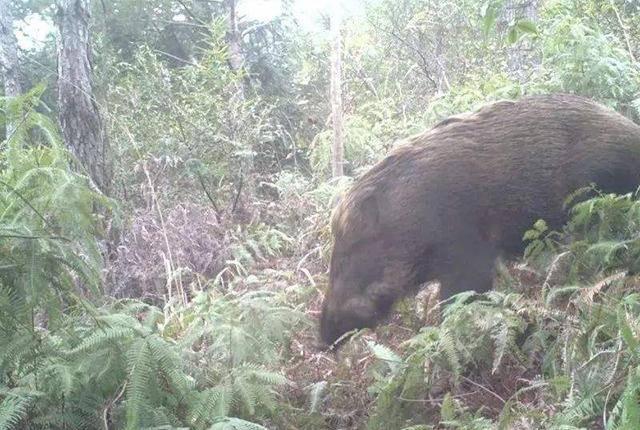 野生动物有哪些(野生动物保护名录)