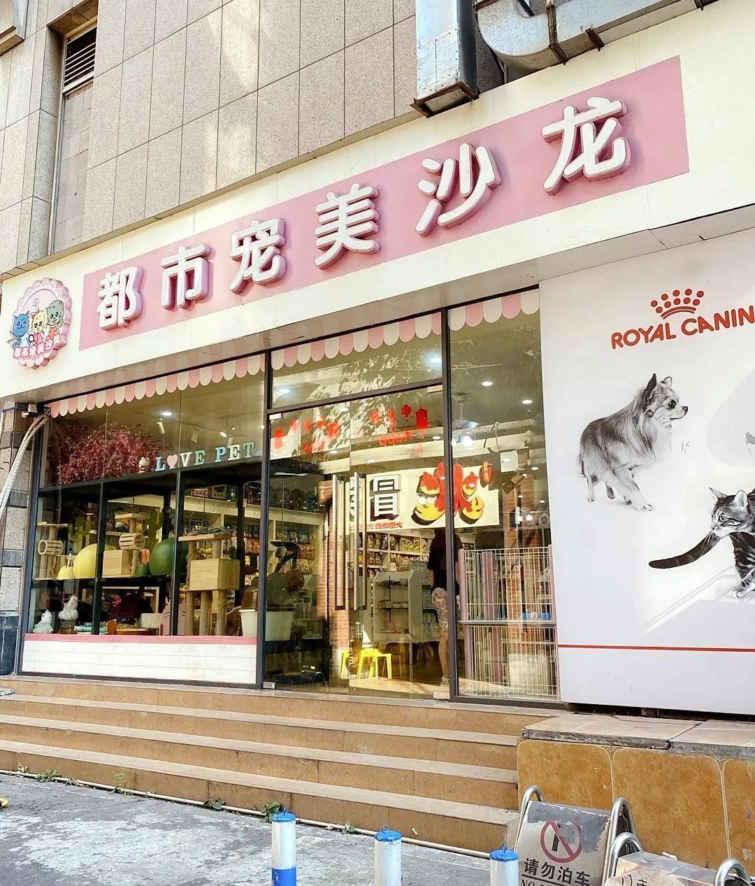 小僧探店 隐于重庆老街却拥有大量高黏度客户,宠物行业没有捷径可走。