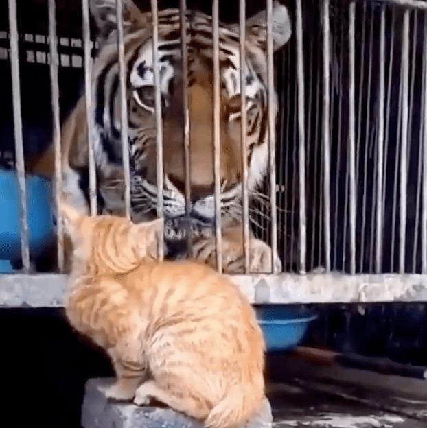 猫:管它什么生物,老子都敢盘!!