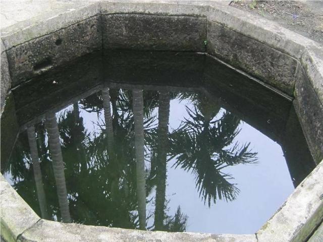 为什么有的古井里面会有鳖呢?它们怎样生存的呢?科学怎么解释呢?插图
