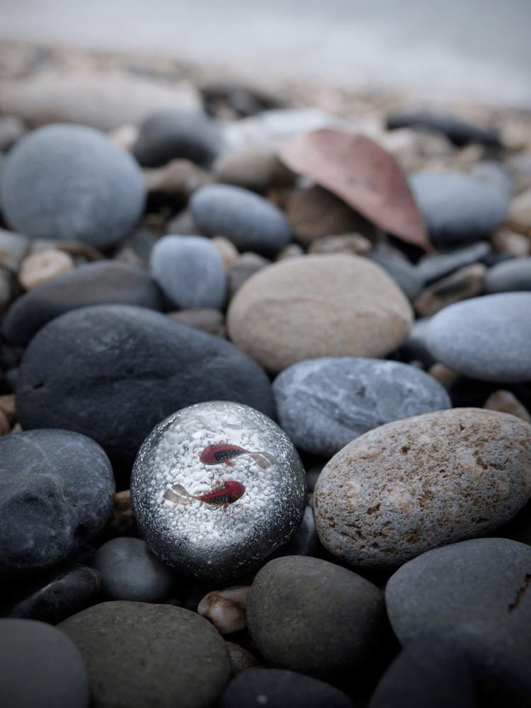 哇哦,看呆了!石头里竟然有鱼!
