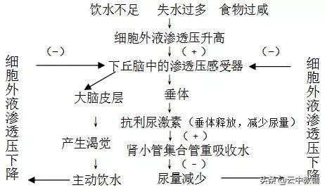 生物必修三知识点总结(高中物理74个二级结论)