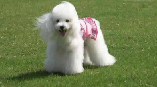 什么狗最聪明?十大聪明犬排名 网络快讯 第3张