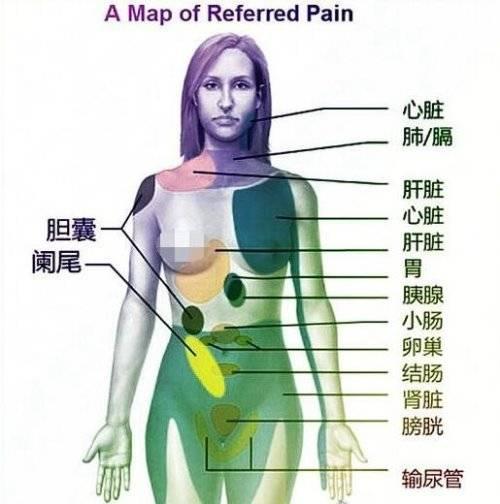 """身体各个器官疼痛位置图片 切记不可""""自诊""""(仅做为参考) 网络快讯 第2张"""